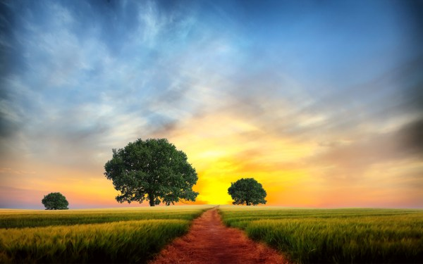 Wheat Path Trees Yellow Sky Wallpapers Stock