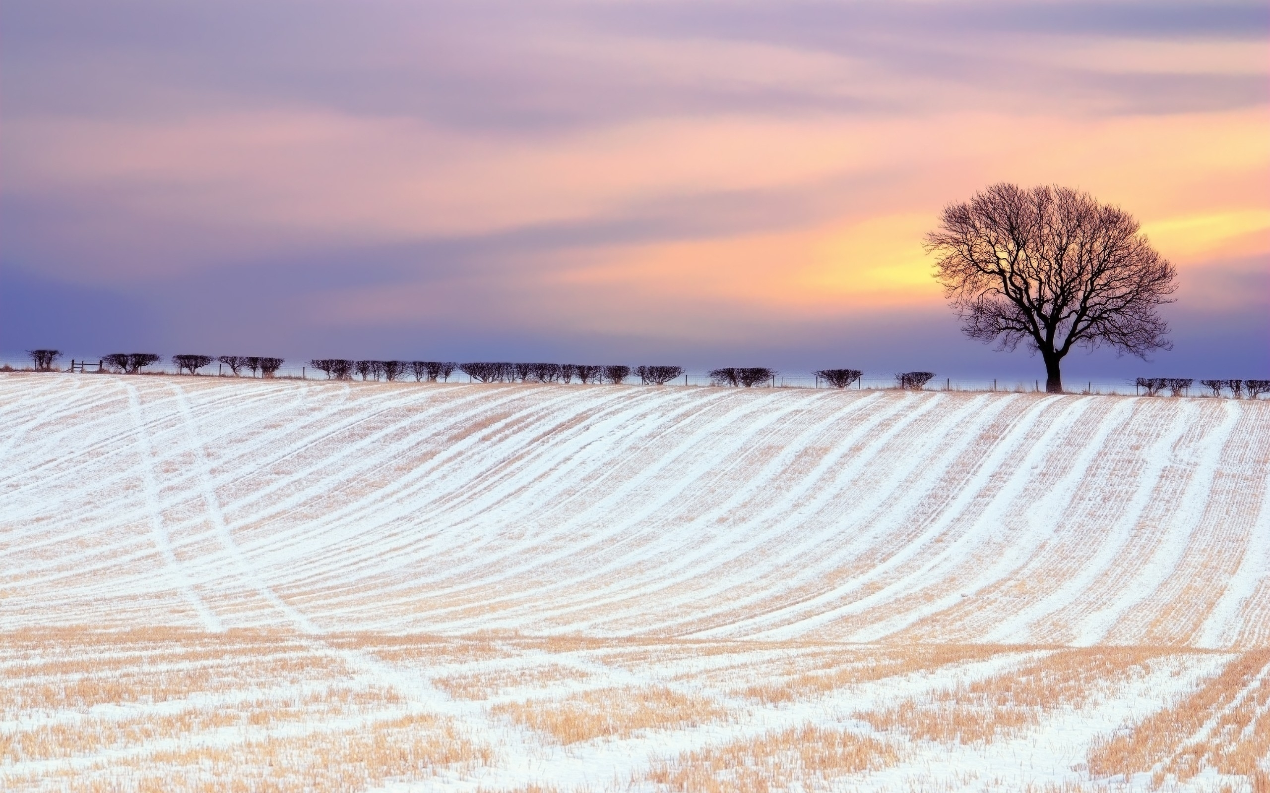 Animated Sunset Wallpaper Winter Field Amp Trees Dawn Wallpapers Winter Field