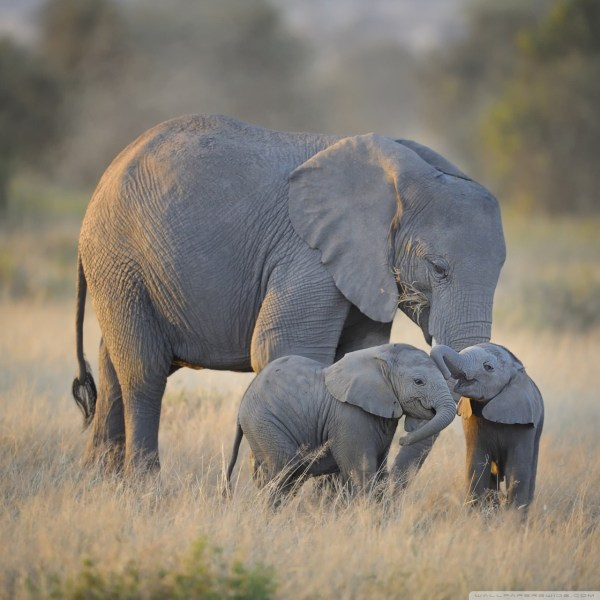 Mother and Baby Elephant Desktop