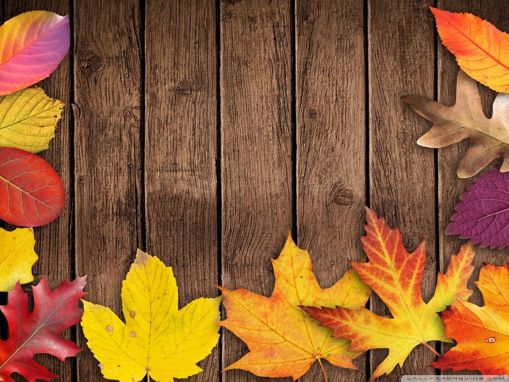 Fall Wood Wallpaper Autumn Foliage 4k Hd Desktop Wallpaper For 4k Ultra Hd Tv