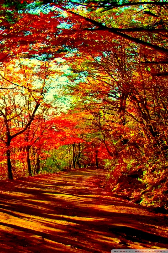 Fall Leaves Iphone Wallpaper Autumn Forest 4k Hd Desktop Wallpaper For Dual Monitor