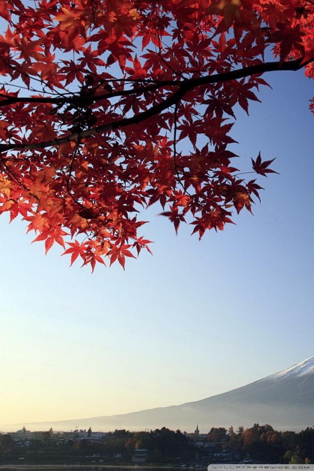 Fall Flowers Wallpaper Iphone Autumn Mount Fuji Japan 4k Hd Desktop Wallpaper For 4k