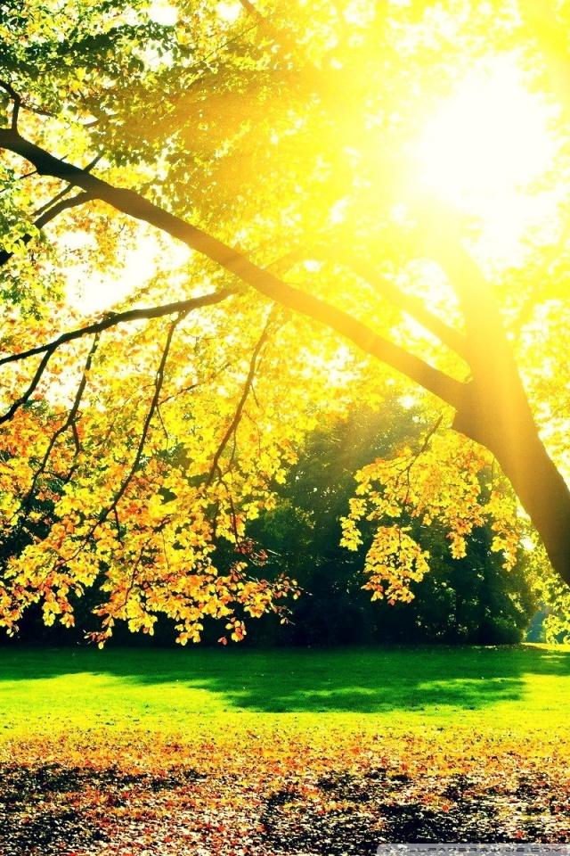Fall Leaves Wallpaper For Ipad Autumn Sunrise 4k Hd Desktop Wallpaper For 4k Ultra Hd Tv