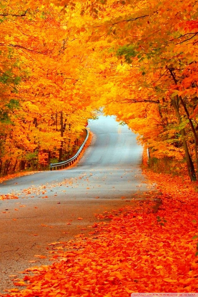 Fall Wallpaper Ipad Mini Beautiful Autumn Orange Trees Road 4k Hd Desktop