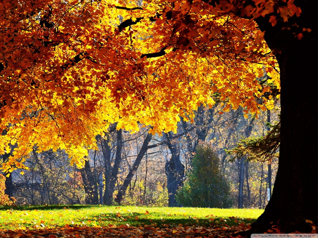 1366x768 Fall Wallpapers Beautiful Fall 4k Hd Desktop Wallpaper For 4k Ultra Hd Tv