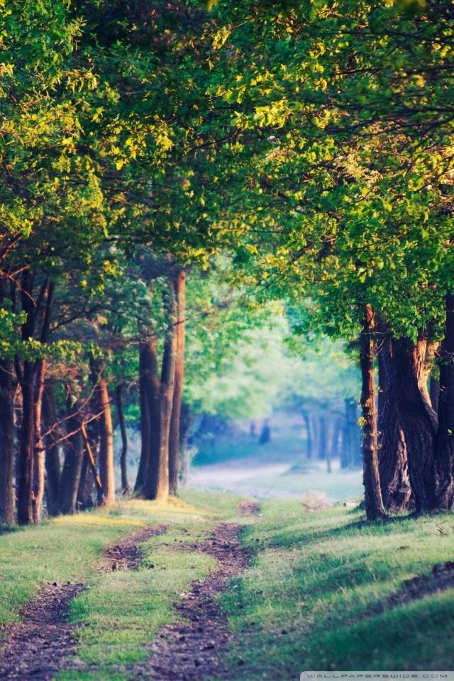 Iphone X Wallpaper Reddit Beautiful Forest Path Summer 4k Hd Desktop Wallpaper For