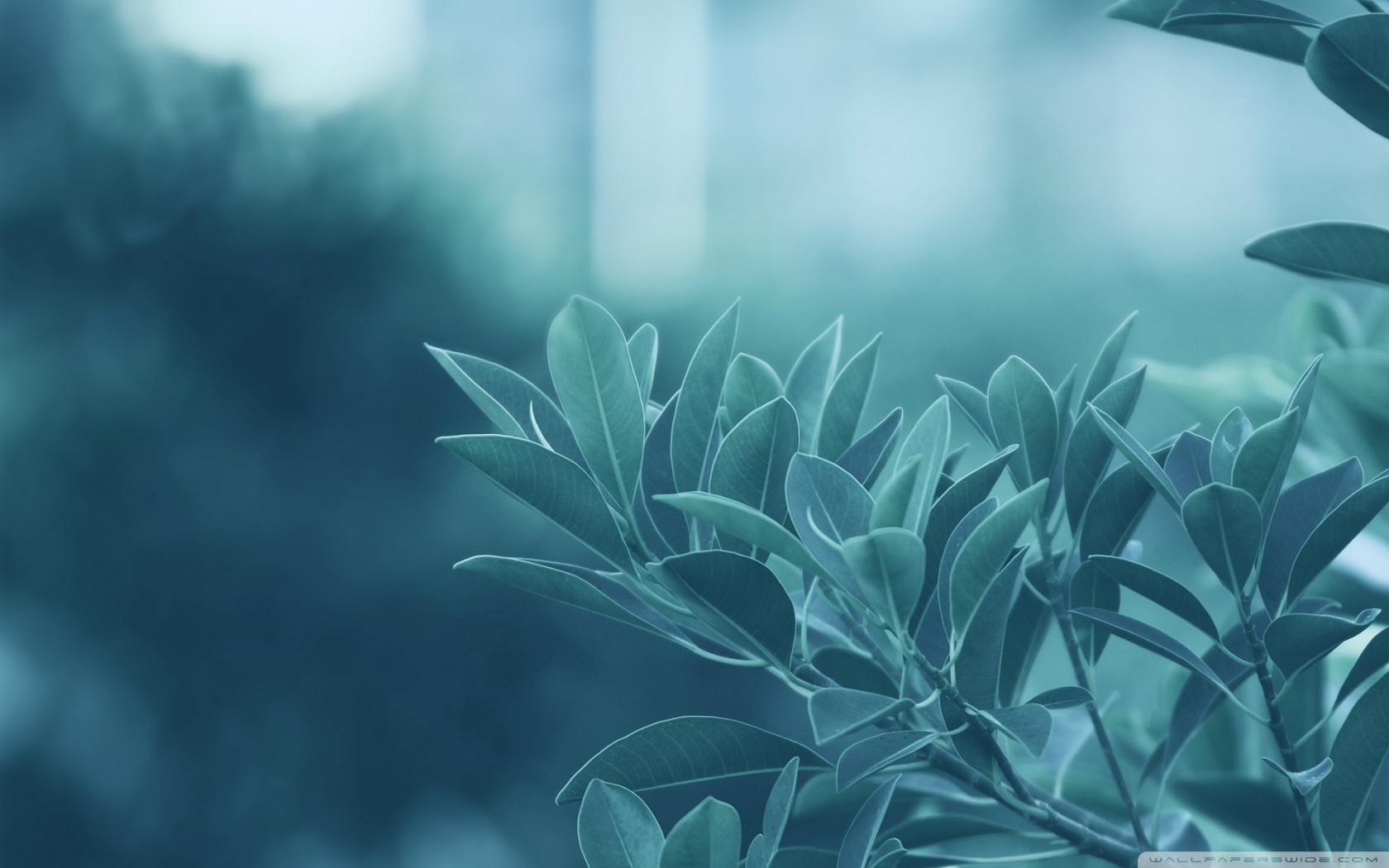 blue leaves 4k hd