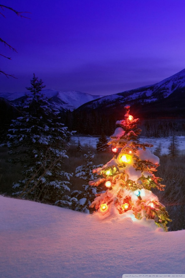 Hd Widescreen Christmas Desktop Wallpaper Christmas Tree With Lights Outdoors In The Mountains 4k Hd