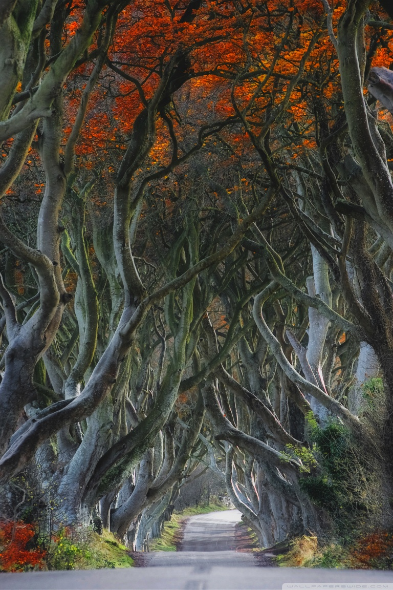Tablet Wallpaper Europe Fall Dark Hedges Beech Trees Northern Ireland 4k Hd Desktop