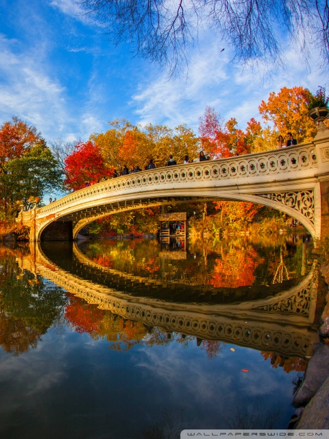 Central Park Iphone 6 Wallpaper Fall Foliage In Central Park New York City 4k Hd Desktop
