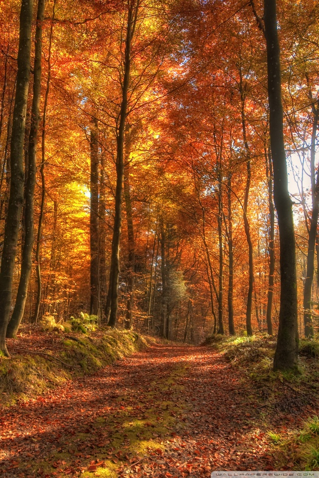 Tablet Wallpaper Europe Fall Fall Forest Path 4k Hd Desktop Wallpaper For 4k Ultra Hd