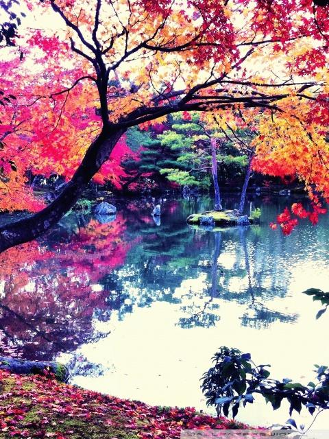 Nature Wallpaper Autumn Fall 1600x1200 Fall In Japan 4k Hd Desktop Wallpaper For 4k Ultra Hd Tv