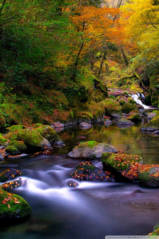 Fall Wallpaper Dual Monitor Forest Creek Autumn 4k Hd Desktop Wallpaper For 4k Ultra