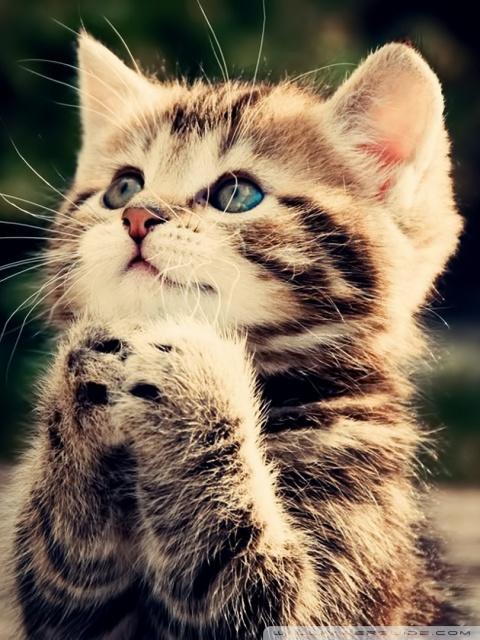 Cute Cats Wallpapers Download Funny Cat Ultra Hd Desktop Background Wallpaper For 4k Uhd