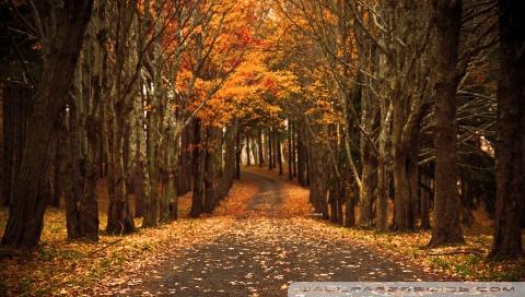 Free Fall Desktop Wallpaper Downloads Late Autumn 4k Hd Desktop Wallpaper For 4k Ultra Hd Tv