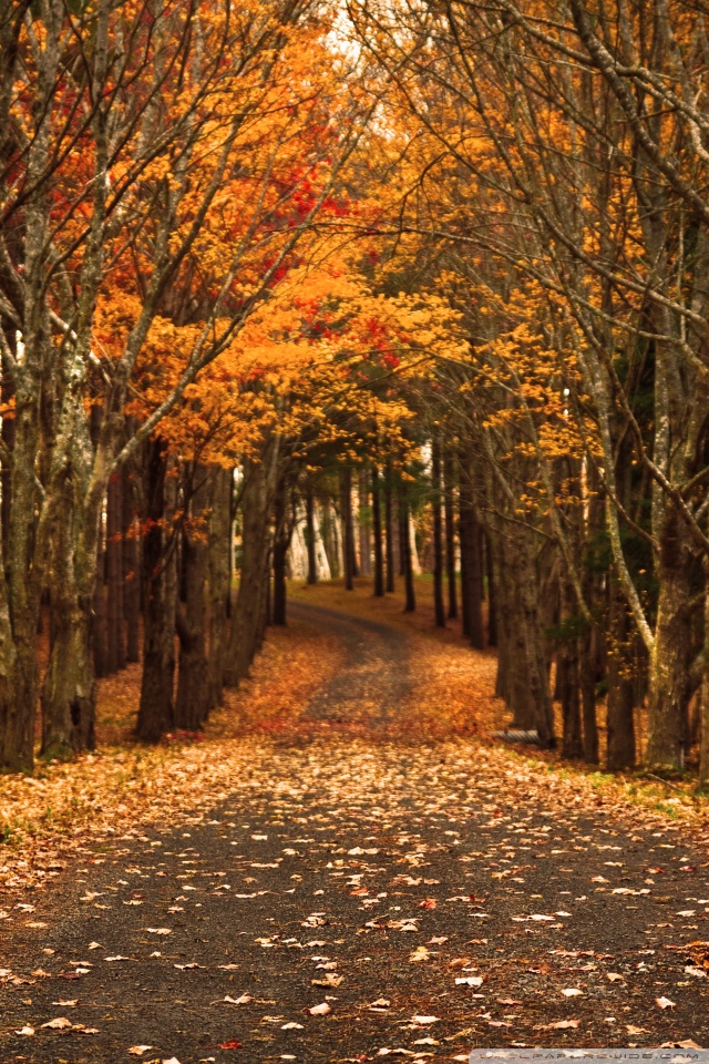 Nature Wallpaper Autumn Fall 1600x1200 Late Autumn 4k Hd Desktop Wallpaper For 4k Ultra Hd Tv