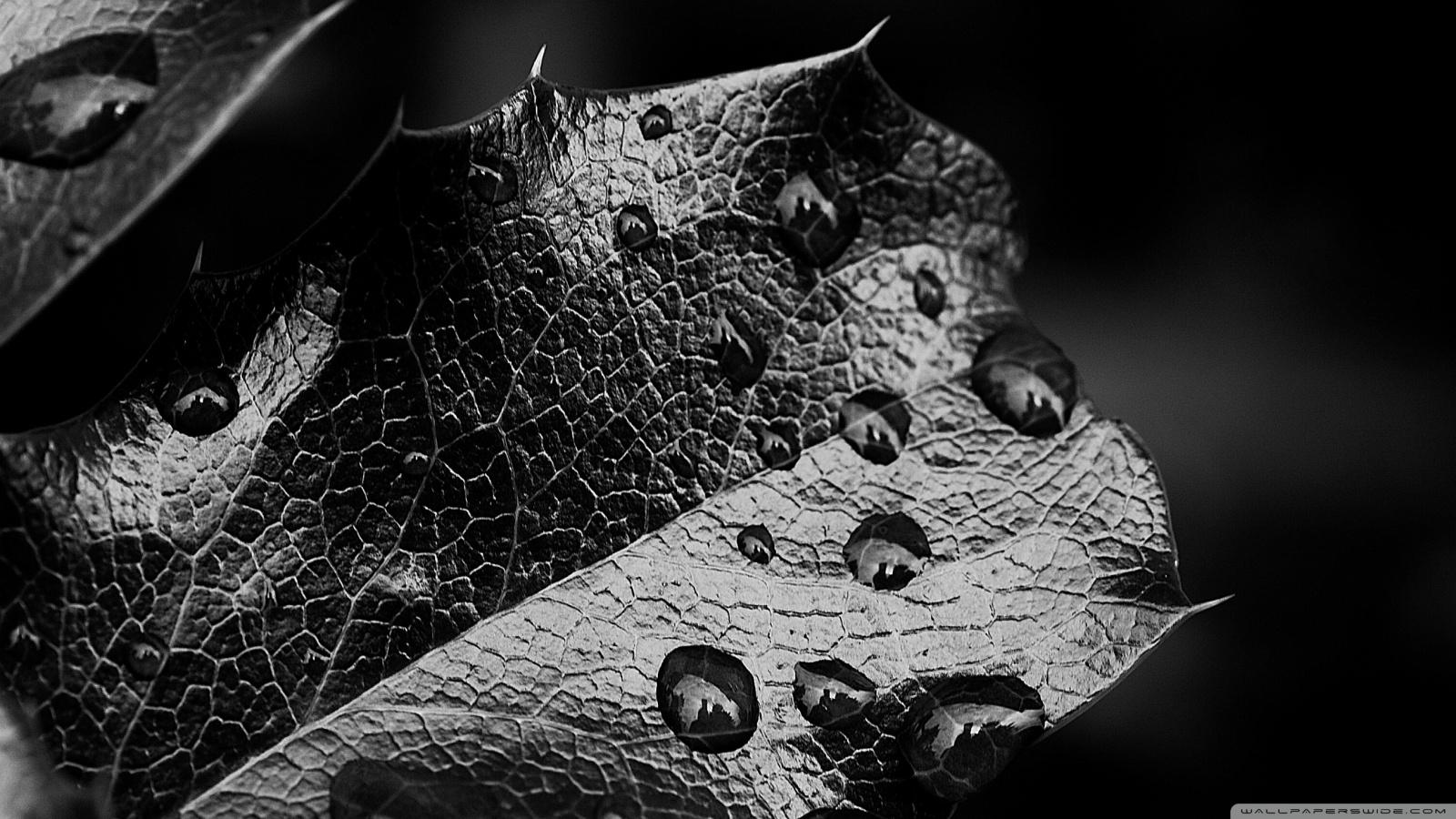 Beautiful Leaf Hd Wallpaper Leaf Macro Black And White 4k Hd Desktop Wallpaper For 4k