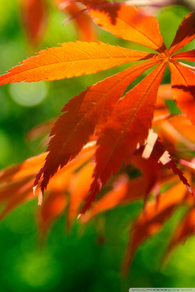 Fall Leaves Ipad Wallpaper Orange Fall Leaves Against A Green Background 4k Hd