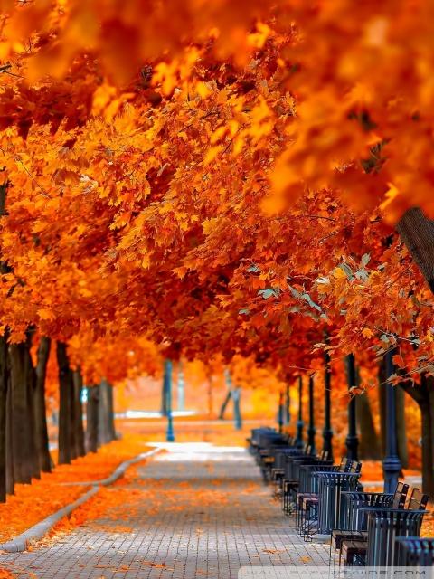 Fall Desktop Wallpaper Widescreen Orange Trees Fall 4k Hd Desktop Wallpaper For 4k Ultra Hd