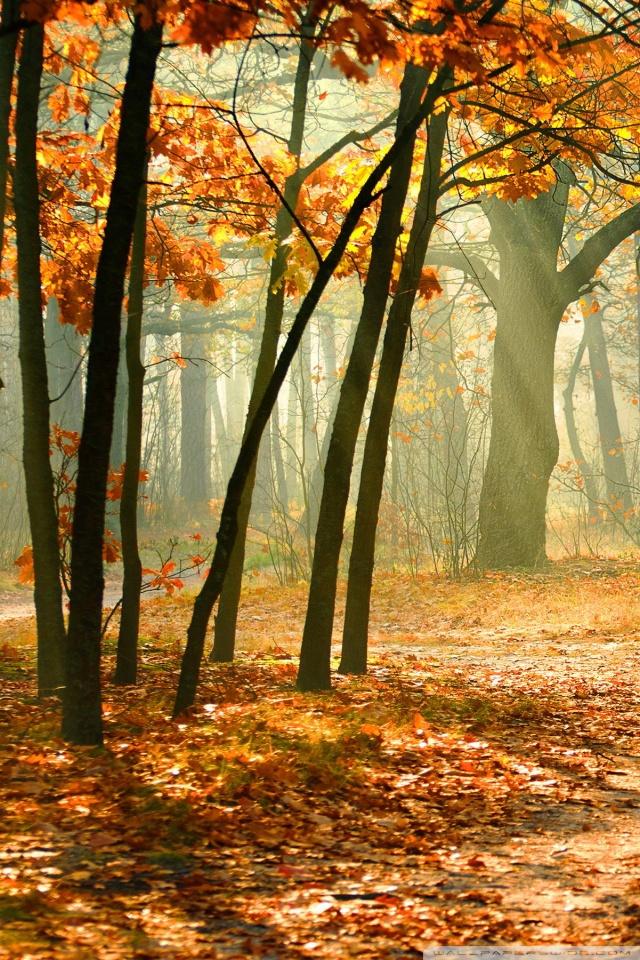 Fall Dual Monitor Wallpaper Real Enchanted Forest 4k Hd Desktop Wallpaper For 4k Ultra