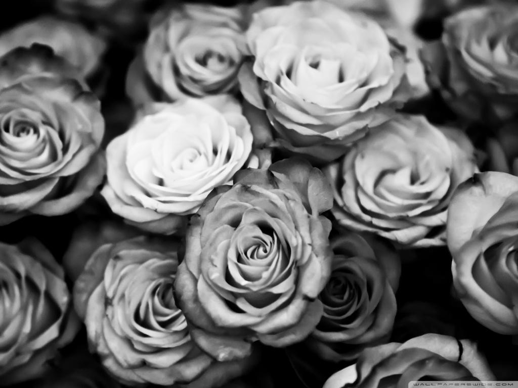 hoontoidly roses tumblr black