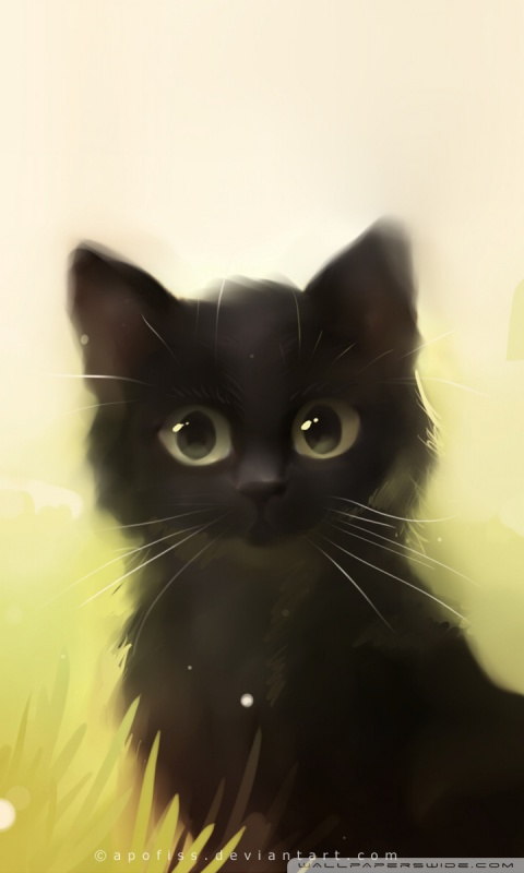 Cute Kitty Cat Wallpapers Savage Cat Ultra Hd Desktop Background Wallpaper For 4k