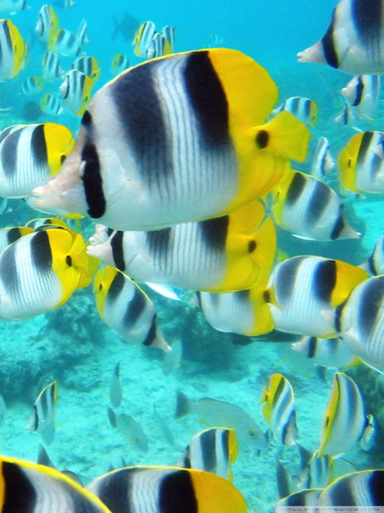 Animated Aquarium Wallpaper School Of Tropical Fish Tahiti 4k Hd Desktop Wallpaper For