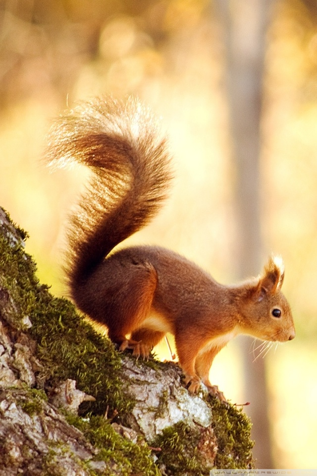 Pinterest Wallpapers Fall Squirrel 4k Hd Desktop Wallpaper For 4k Ultra Hd Tv Wide