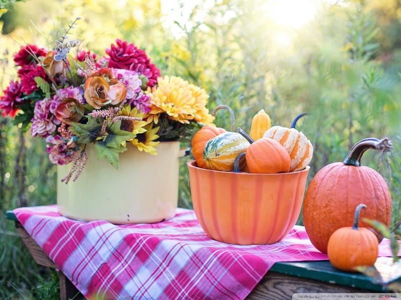 Fall Harvest Wallpaper 1024x768 Still Life Pumpkins In Bowl Flowers Early Autumn Ultra