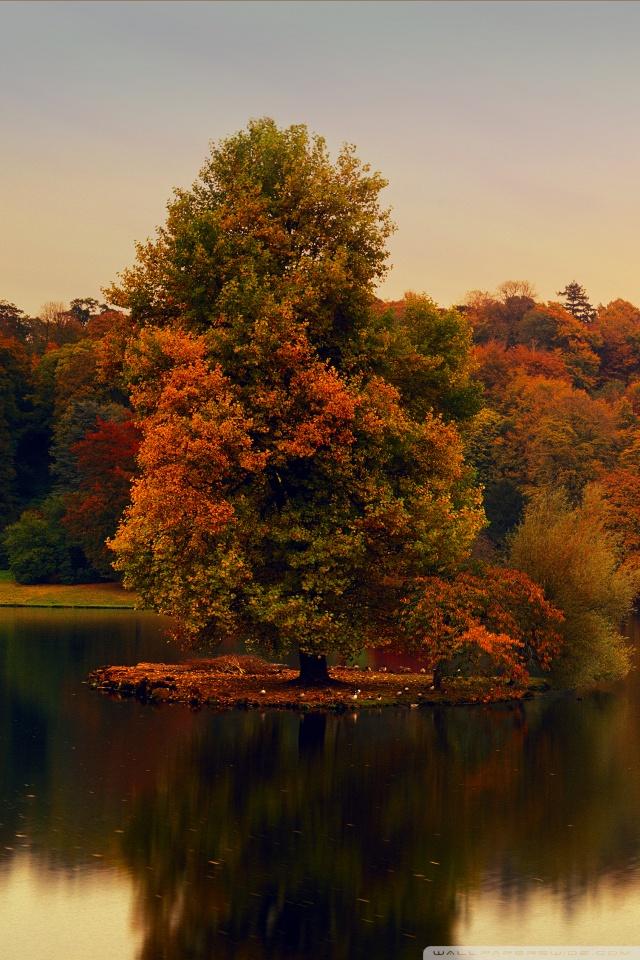 Fall Foliage Wallpaper Widescreen Stourhead Wiltshire England 4k Hd Desktop Wallpaper For
