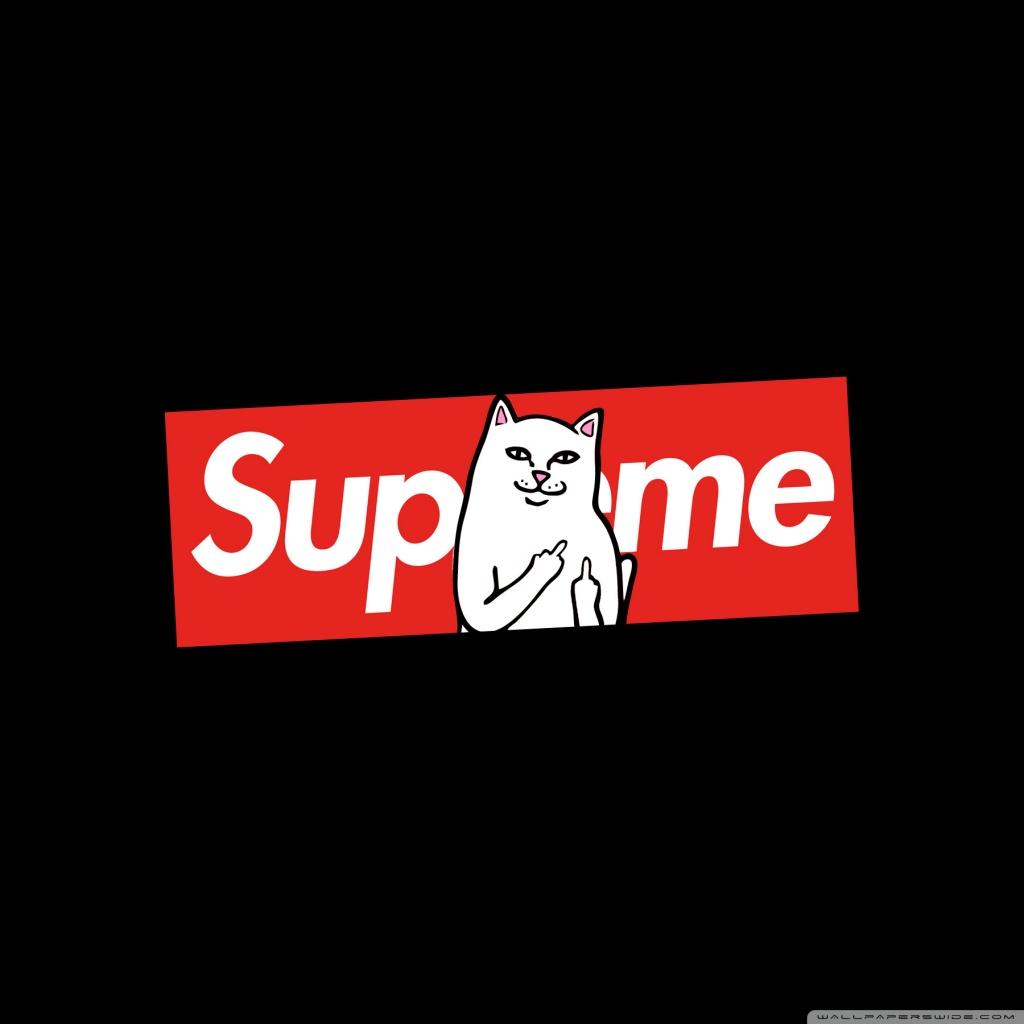 Gucci Snake Wallpaper Iphone X Supreme Cat 4k Hd Desktop Wallpaper For 4k Ultra Hd Tv