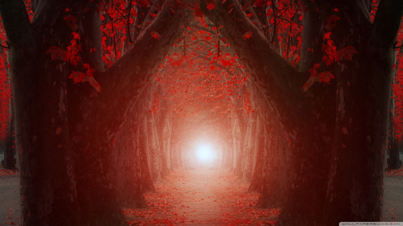 Free Desktop Wallpaper Fall Trees The Light At The End Of The Tree Tunnel 4k Hd Desktop