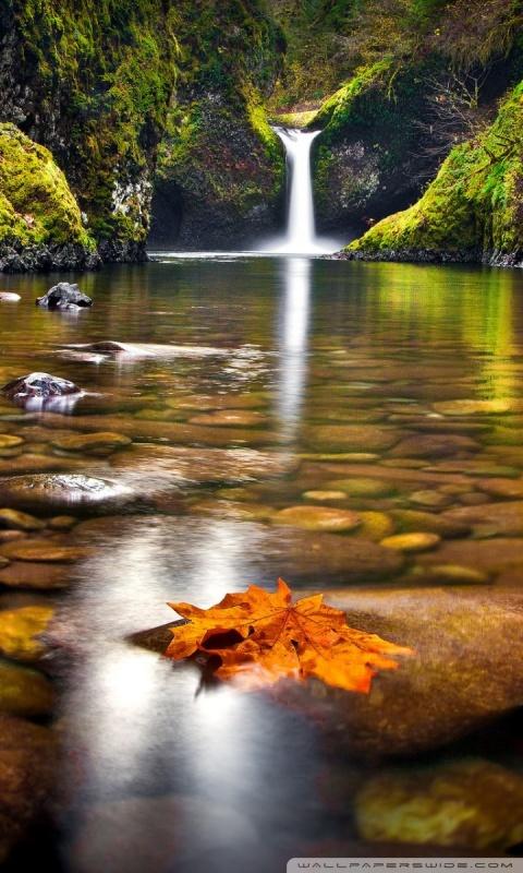 Fall Leaf Wallpaper For Mobile Yellow Leaf In The River 4k Hd Desktop Wallpaper For 4k