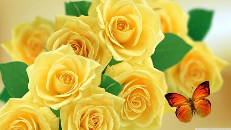 Yellow Rose Flower Background Wallpaper Wajiflower Co