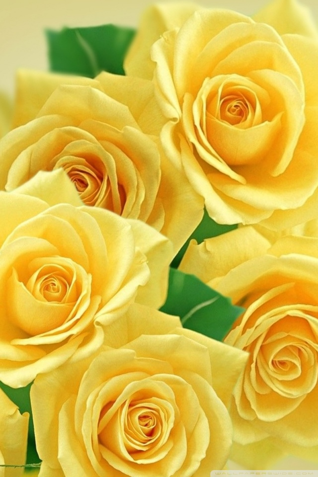 Cute Wallpapers For Binder Yellow Roses And Butterflies Ultra Hd Desktop Background