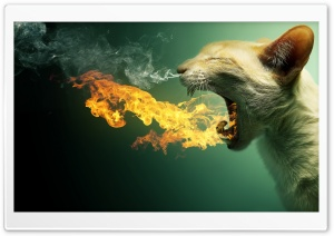 Flaming Cat