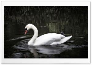 Swan Japan