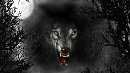 wolf dark evil wolves eyes cruel vicious moon wallpapertag