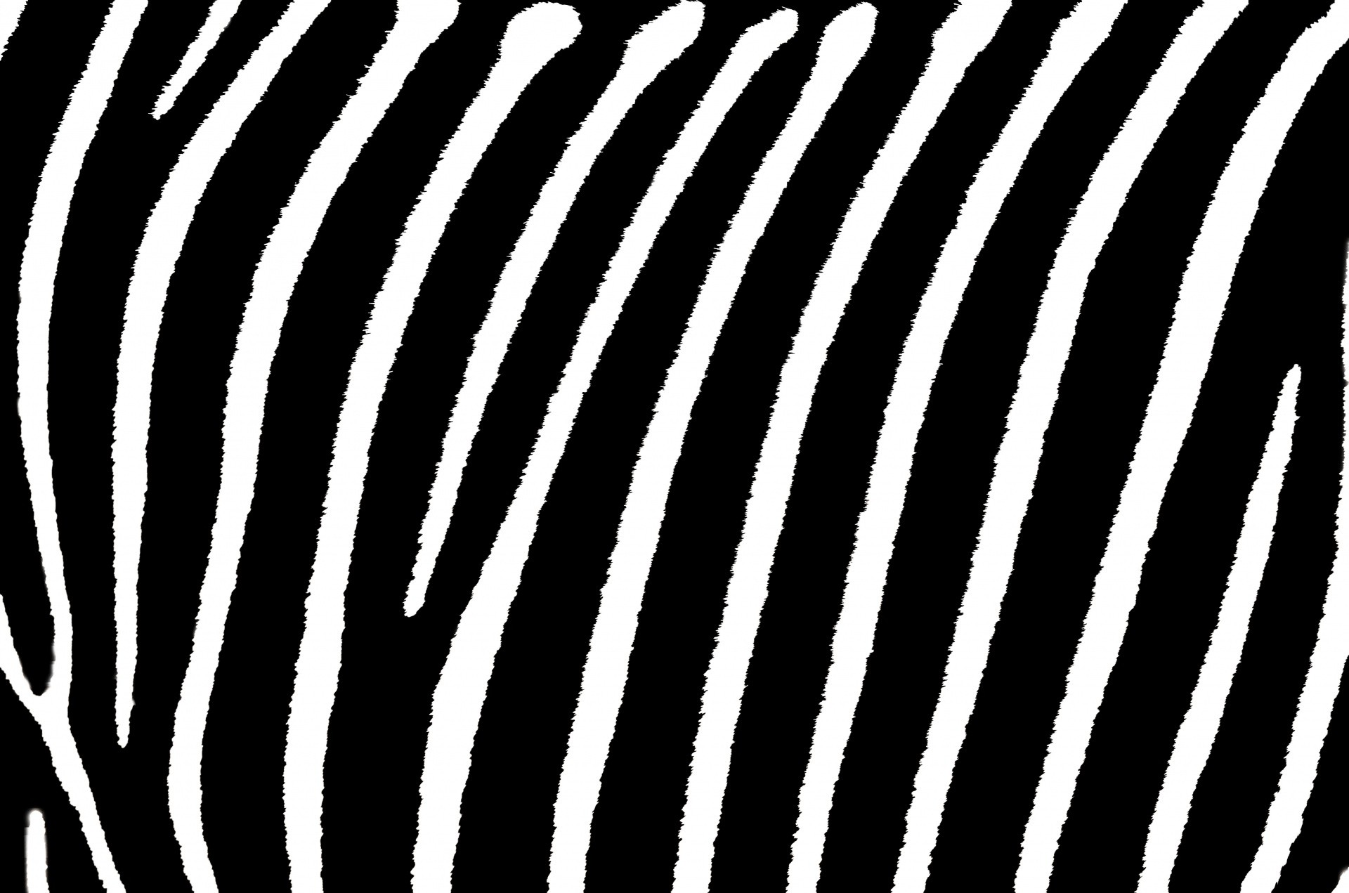 Neon Animal Print Wallpaper Zebra Background 183 ① Download Free Stunning Hd Wallpapers