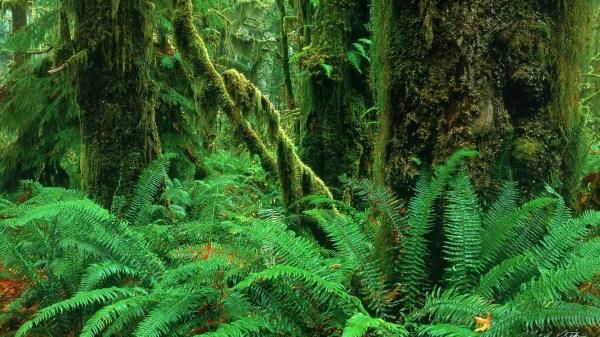 Rainforest background Download free beautiful full HD