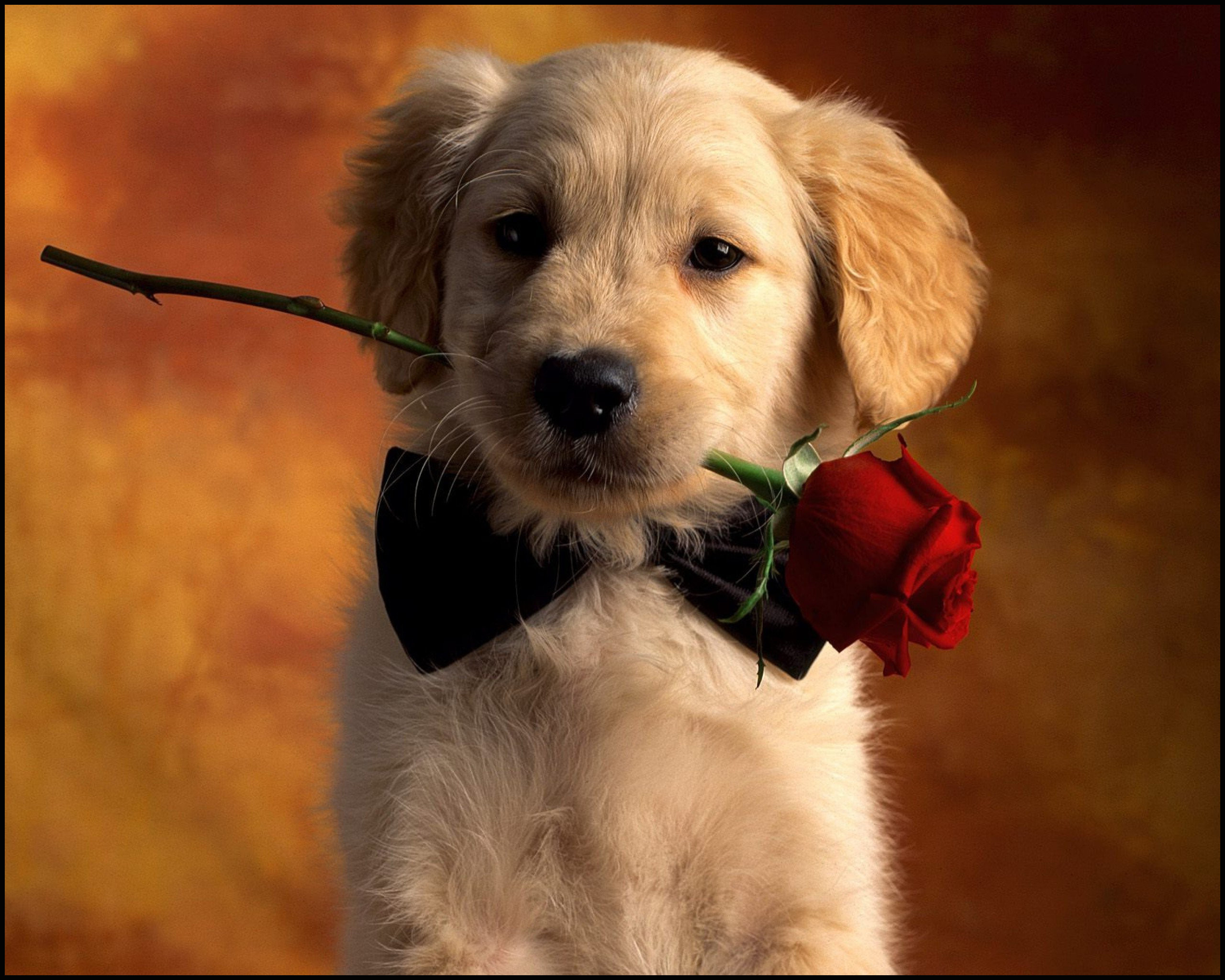 Cute Dogs Wallpapers ·① WallpaperTag