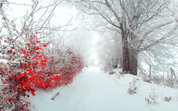 Beautiful Christmas Winter Landscapes