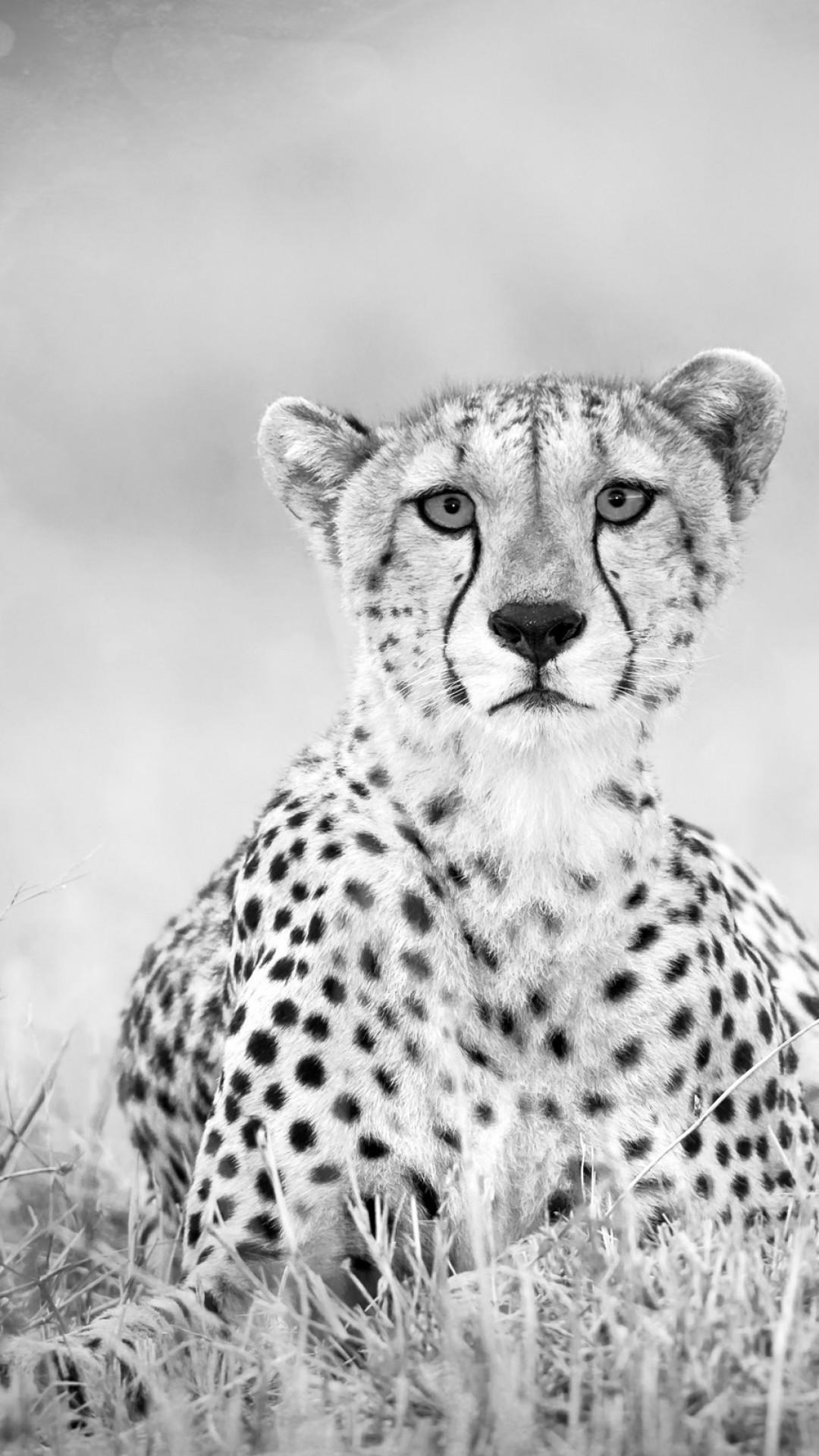 Cheetah Print Wallpaper Hd Black Cheetah Wallpaper 183 ① Wallpapertag