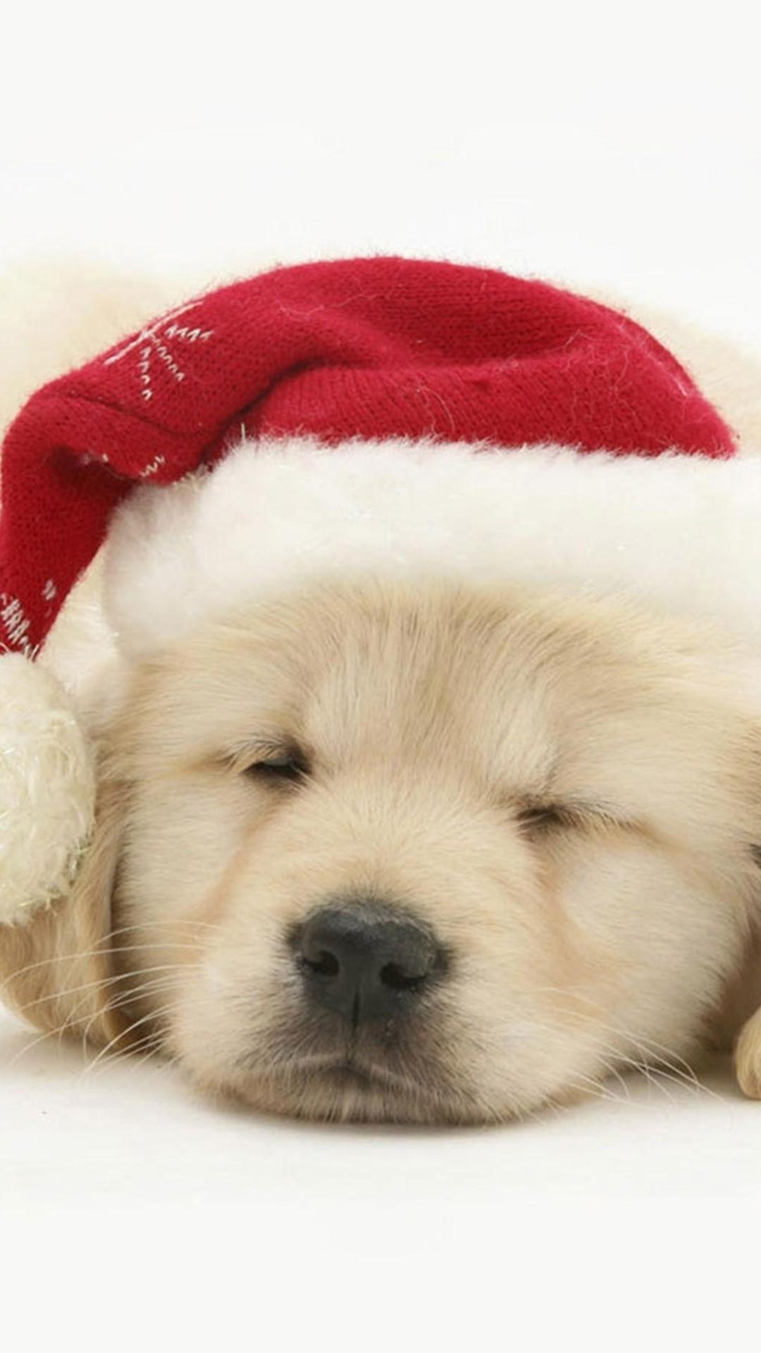 Santa Claus Girl Wallpaper Puppy Christmas Wallpaper 183 ① Wallpapertag