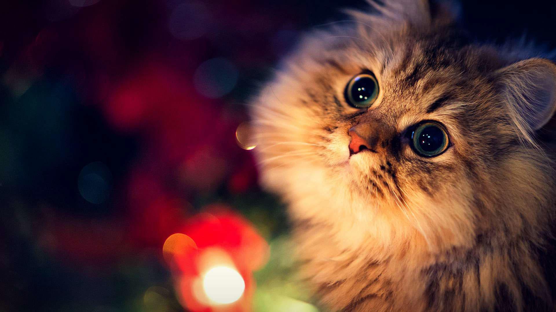 Christmas Cat Wallpaper ·①