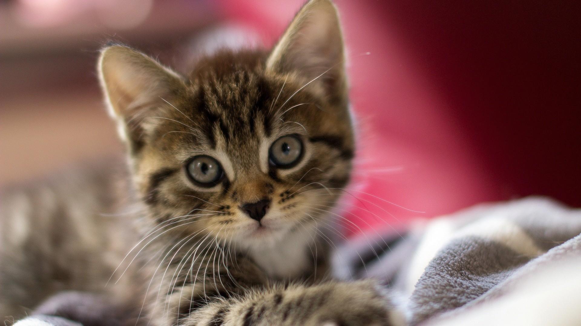 Very Cute Baby Mobile Wallpaper Baby Kitten Wallpaper 183 ① Wallpapertag