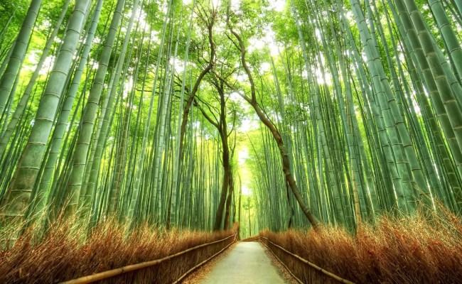 Japan Nature Wallpaper Wallpapertag