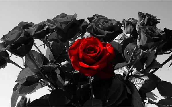 Black And Red Roses Tumblr Wallpaper Imgurl