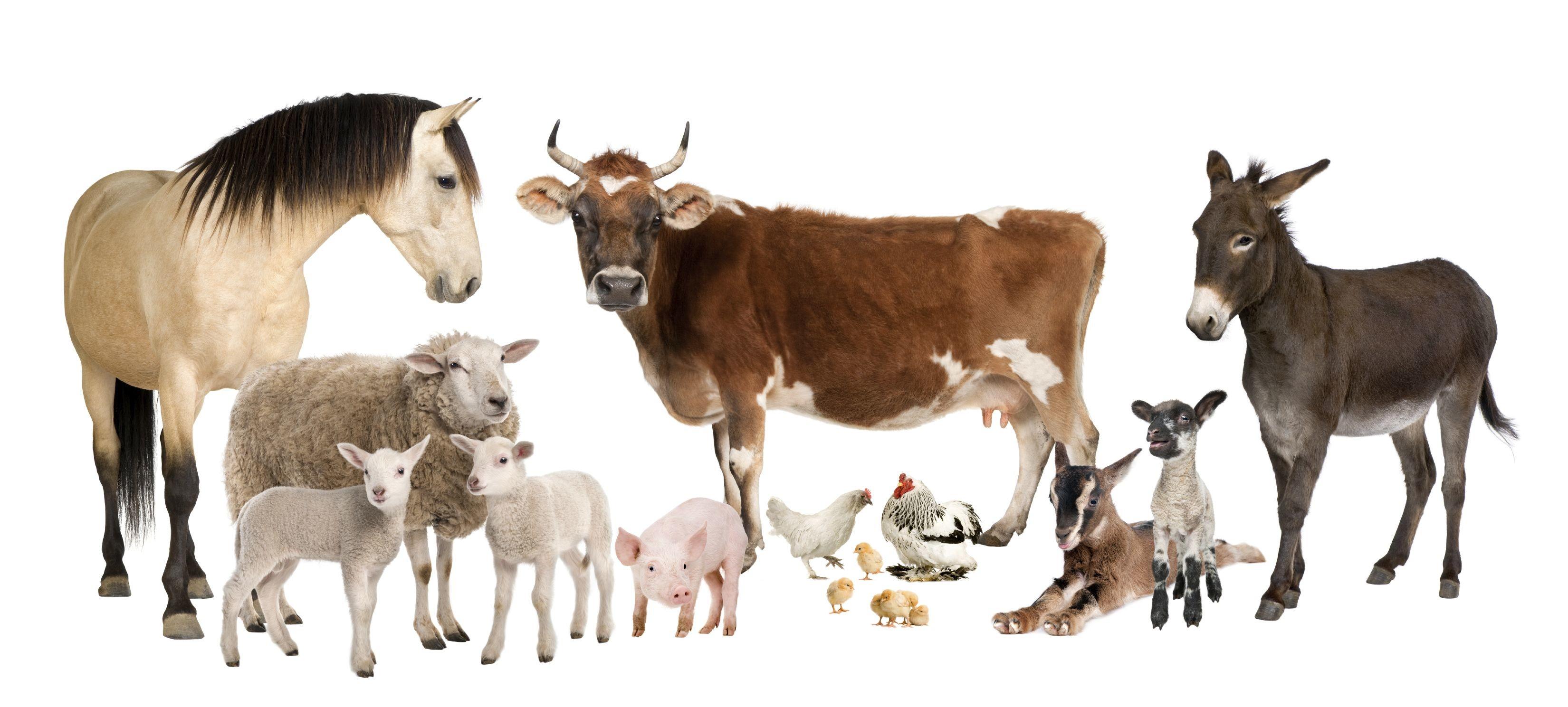 Farm Animals Wallpaper ·①