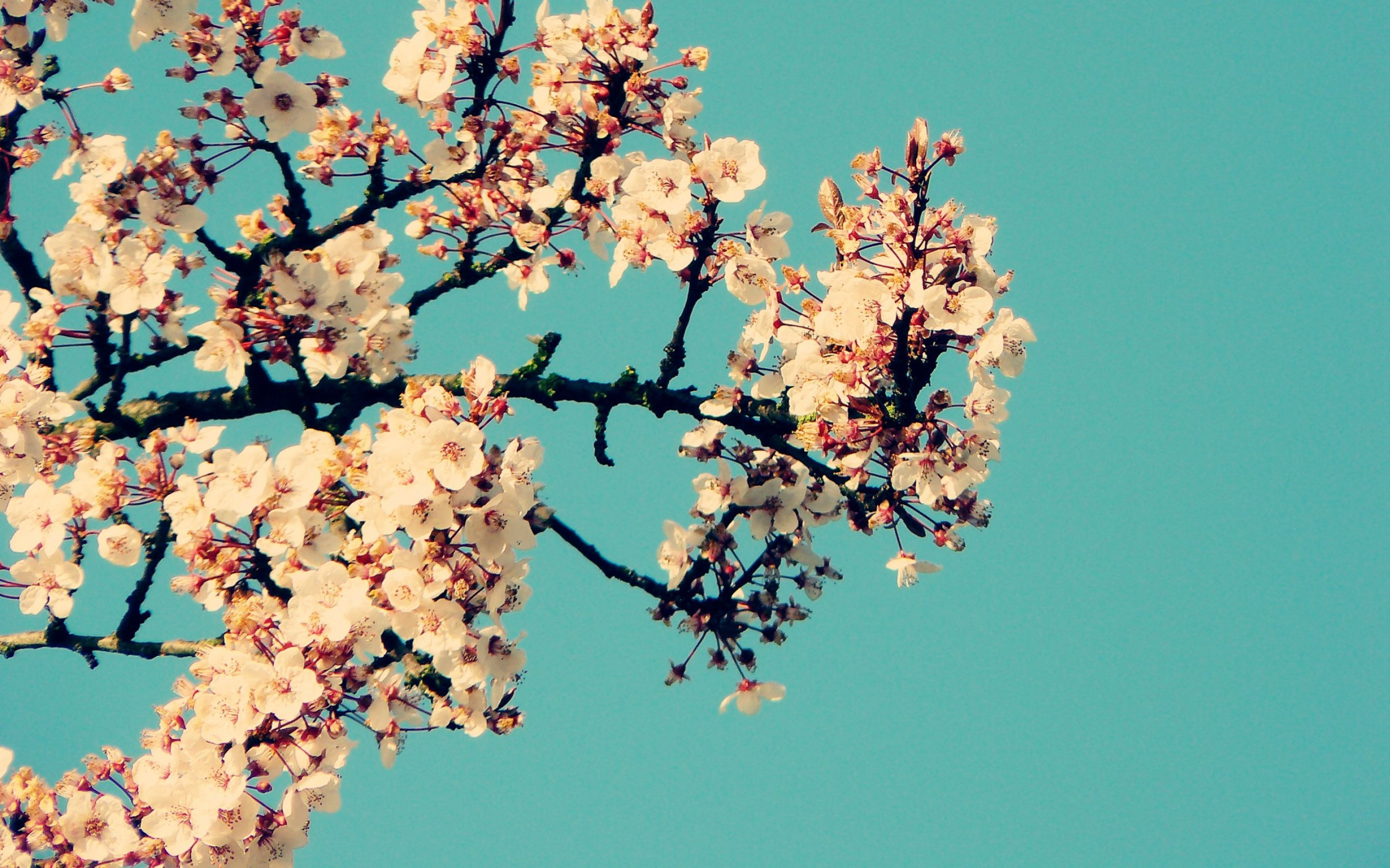17+ Tumblr Computer backgrounds ·① Download free stunning HD backgrounds for desktop and mobile devices in any resolution: desktop. Android ...